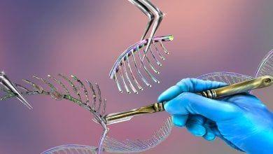 Il viaggio di CRISPR verso l'applicazione clinica