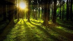 Piantare alberi …